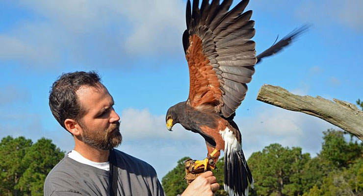 Never Stop Looking Up – The Center for Birds of Prey